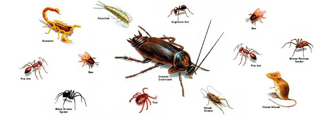 Plagas plagaskil - Insectos en casa fotos ...