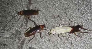 nido de cucarachas 1